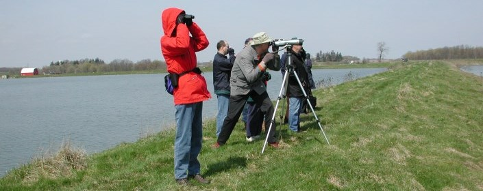 Birdwatching at wetlands