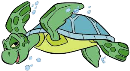 Preshool SeaTurtle